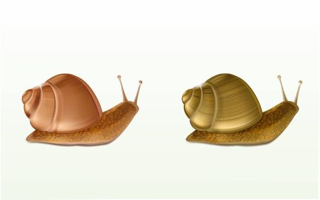 Two creeping Burgundy or Roman snails 3d vector icons isolated on white background. French cuisine delicatessen, edible and farming European specie snail, skincare cosmetics ingredient illustration