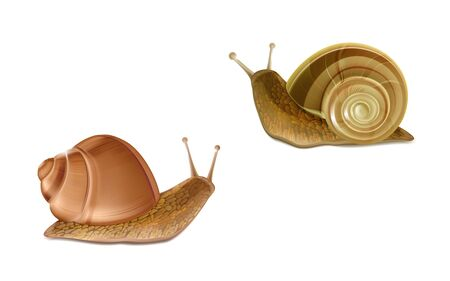 Vector 3d realistic two creeping Burgundy or Roman snails. French cuisine delicatessen, edible and farming European specie snail, skincare cosmetics ingredient. Gastropods isolated on white background Standard-Bild - 127372156