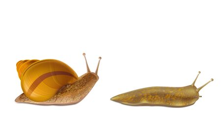 Creeping Burgundy or Roman snail and red slug 3d realistic vector icons isolated white background. French cuisine delicatessen, edible and farming European specie snail, garden pests illustrations Standard-Bild - 127372258