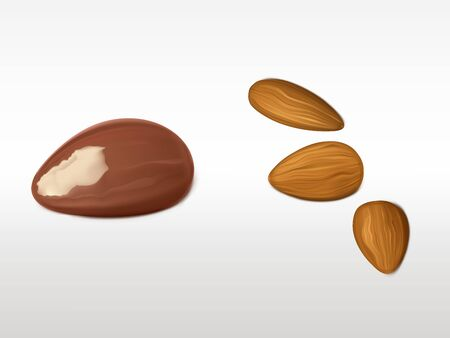 Almonds and brazilian nut set isolated on white background. Unpeeled fresh products for healthy vegetarian nutrition. Highly detailed elements for advertising design. Realistic 3d vector illustration.