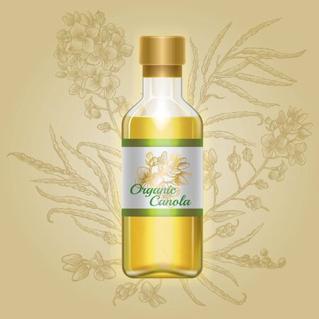 Organic canola, mustard oil in glass bottle with drawn flowers on label. Vector illustration of container with liquid cold rape oil on background of engraved rapeseed plant