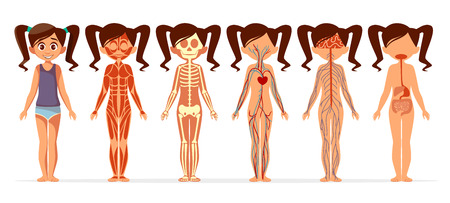 Chica cuerpo anatomía ilustración vectorial. Estructura médica del cuerpo humano femenino médico de diseño plano muscular, esquelético, sanguíneo y venoso circulatorio o nervioso y digestivo para infografías
