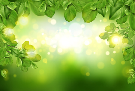 Tree leaves border on green abstract defocused background with sun beams and blurry shining circles. Fresh spring or summer season floral backdrop or nature template. Realistic 3d vector illustration Ilustrace