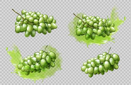 Realistic grapes bunches and juice splashes set isolated on transparent background, green berries graphic element for natural fruit drink advertising or package design 3d vector illustration, clip art Foto de archivo - 131813314