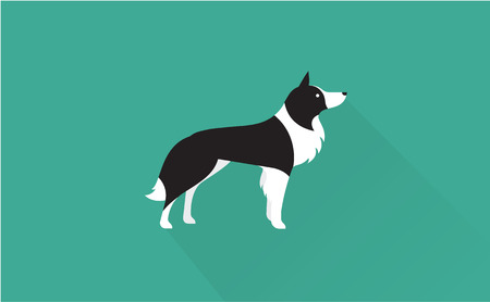 border collie vector flat illustration clean and simple style Illustration