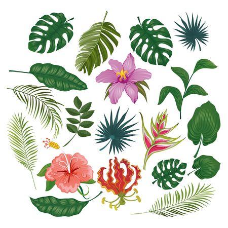 Lindas pegatinas y etiquetas tropicales sobre fondo blanco. Conjunto de verano de hojas y flores. Ilustración vectorial Ilustración de vector