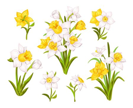 Set of beautiful narcissus flowers for cards, posters, textile etc. Cartoon narcissus vector illustration