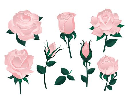 Set of beautiful roses isolated on white background.Colorful vector roses for invitations, greeting cards, posters etc. Иллюстрация