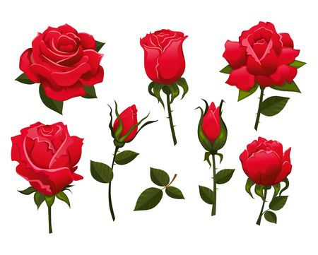 Set of beautiful red roses isolated on white background.Colorful vector roses for invitations, greeting cards, posters etc.