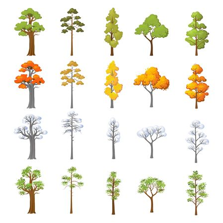 Set of different trees with seasonal design. Cartoon trees in snow and leaves isolated on white background. Vector illustration