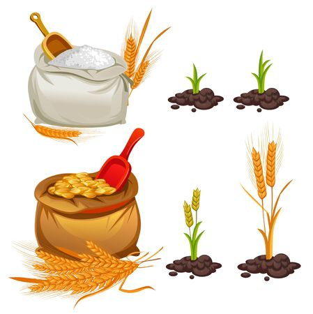 Wheat, oats and barley set. Cartoon flour, wheat bunches and pieces of plants. Vector illustration Иллюстрация