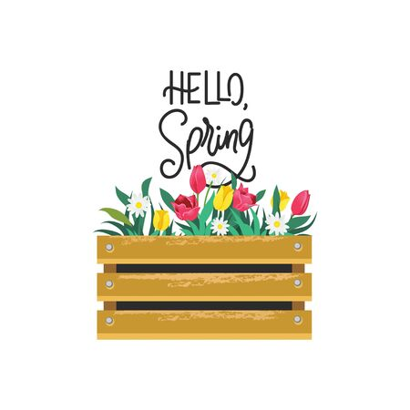 Hello spring card with lettering and flowers in wooden box vector illustration. Seasonal greeting with handwritten text cartoon design. Blooming tulips and daisies. Springtime concept