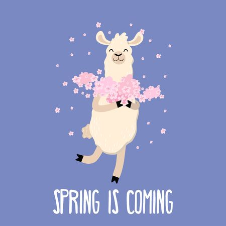 Spring is coming cute card with funny llama vector illustration. Lama holding pink flowers on purple background. Creative greeting card in cartoon design. Springtime concept