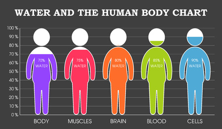 Water and the human body chart infographic 向量圖像