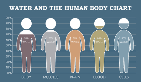 body of water: Water and the human body chart infographic Illustration