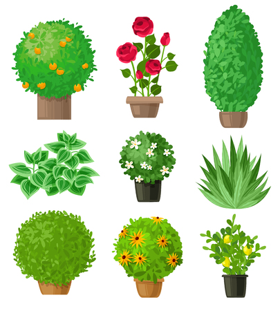 Outdoor garden landscape isolated plants on a white background. Set of nine detailed garden bushes. Summer and spring flowers in garden. Illustration