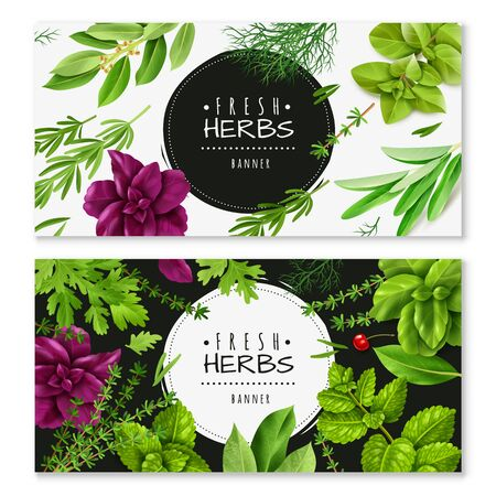 spices herbs horizontal banners. Two horizontal banners with a realistic fresh herbs, isolated objects, popular culinary plants
