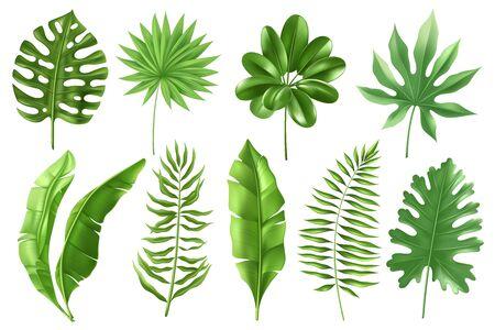 Set di foglie di palma tropicali in uno stile dettagliato realistico. Foglie di banana in diverse angolazioni. Monstera, tipi di felci. Fogliame esotico. Illustrazione vettoriale