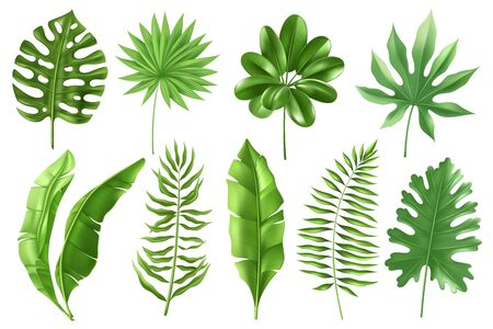 Set of tropical palm leaves in a realistic detailed style. Banana leaves in different angles. Monstera, types of ferns. Exotic foliage. Vector illustration