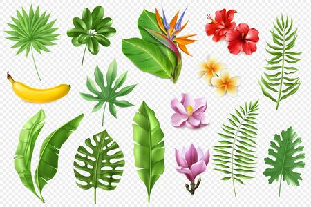 A large set of realistic tropical leaves and flowers on a transparent background. Vector illustration