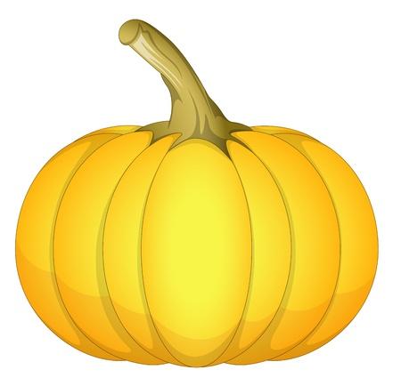 Fresh Pumpkin Stock Vector - 13430130