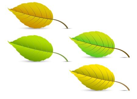 Leaves Stock Vector - 15171672