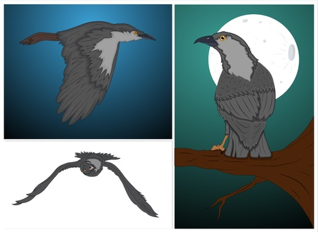 Classic Crow Vectors Set Vector