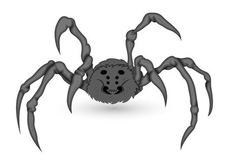 Poisonous Vector Spider Vector