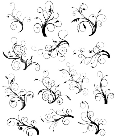 decorative lines: Swirl Floral Collection