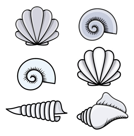 sea cob: Conchas - Cartoon ilustración vectorial