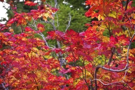 hojas de colores: oto�o hojas de colores de fondo