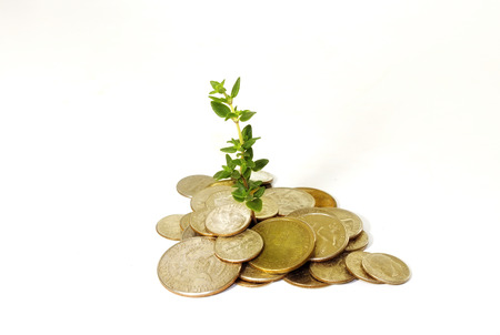 oude munten: old coins and baby plant