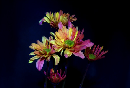 flower bunch: flower bunch isolated on black background