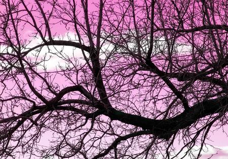 arbre mort: morts fond arbre Banque d'images