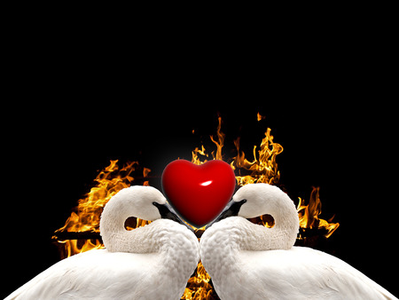 love birds background photo