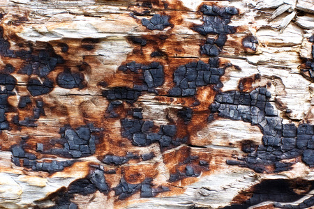 wood surface: burned surface of wood