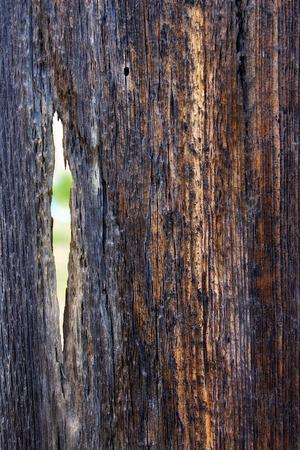 barnwood: viejo barnwood