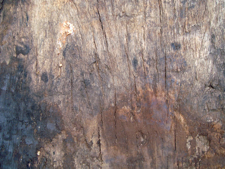 barnwood: timber wood background