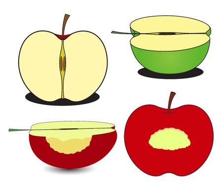 Half and Eaten Apples Vector