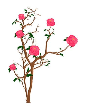 plante design: Fleurs roses Plant Design Illustration