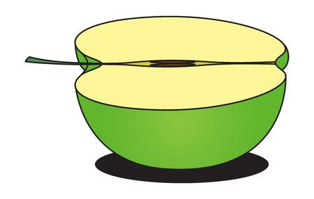 Green Apple Slice Vector