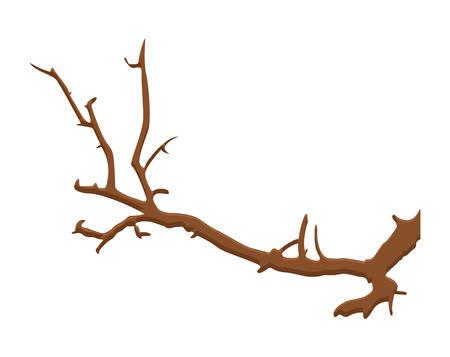 tree branch: Dry Tree Branch