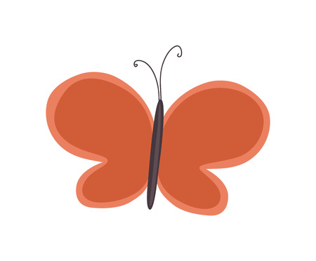 butterfly isolated: Isolated Butterfly