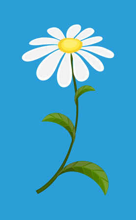 white daisy: White Daisy Vector Illustration