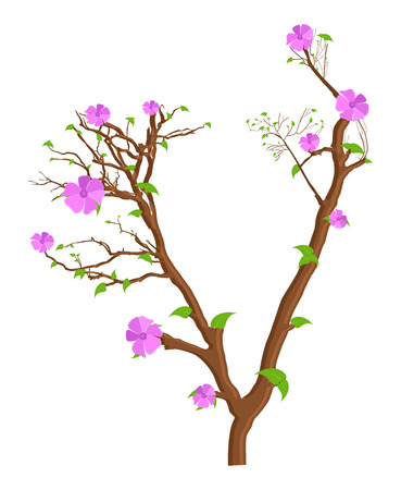 fresh flowers: Pink Fresh Flowers Branches Illustration