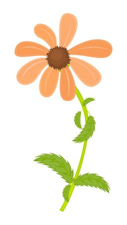 orange blossom: Orange Blossom