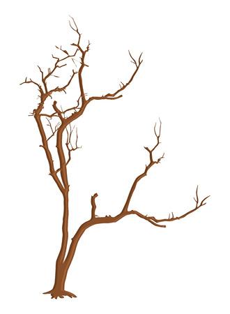 arbre mort: Forme Old Dead Tree