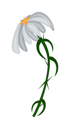 white blossom: White Blossom Abstract Design