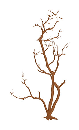 dead tree: Isolated Dead Tree Background