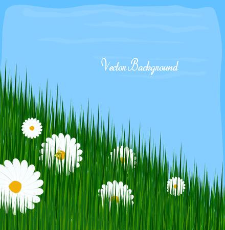 grasses: Wildflowers Grasses Background